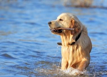 Dog Skin Cancer