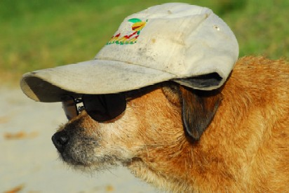 Dog Sunscreen For Your Pet S Protection