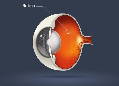 Macular Degeneration Retina and Macula